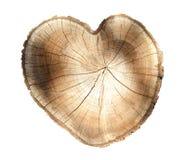 Поперечное сечение колец дерева Стоковое Изображение