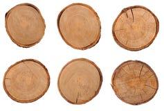 Поперечное сечение нескольких пней дерева Стоковое Изображение RF