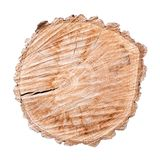 Поперечное сечение ствола дерева изолированное на белой предпосылке стоковое фото rf