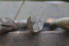 Поперечное сечение ствола дерева показывая годичные кольца на белой предпосылке Деревянная текстура Стоковое Изображение