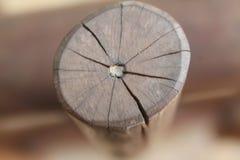 Поперечное сечение ствола дерева показывая годичные кольца на белой предпосылке Деревянная текстура Стоковое Фото