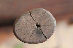 Поперечное сечение ствола дерева показывая годичные кольца на белой предпосылке Деревянная текстура Стоковые Изображения RF