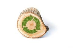 Поперечное сечение ствола дерева с рециркулирует символ Стоковые Фотографии RF