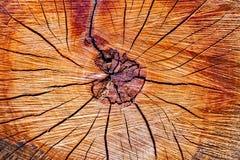 Поперечное сечение ствола дерева Стоковое Изображение RF