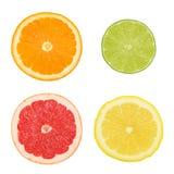 Поперечные сечения различных (изолированных) цитрусовых фруктов Стоковое Изображение RF