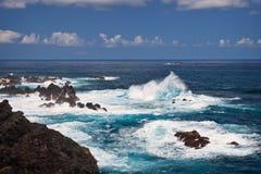поплавайте вдоль побережья Мадейра Стоковые Изображения