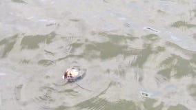 Поплавки озера раковин на поверхности воды видеоматериал
