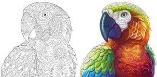 Попугаи ары Zentangle иллюстрация вектора