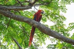 попугаи на дереве Стоковое фото RF