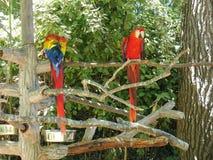 Попугаи на зоопарке Стоковое Фото