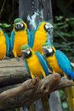Попугаи стоковое фото