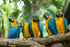 Попугаи стоковые фотографии rf