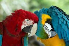 Попугаи стоковое изображение