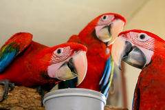 Попугаи стоковое изображение rf