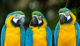 Попугаи стоковая фотография