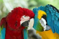 Попугаи стоковые изображения rf