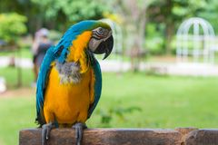 Попугай ары стоя на дереве в парке Стоковое Фото