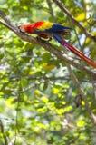 Попугай ары с предпосылкой тропического дерева Стоковое фото RF