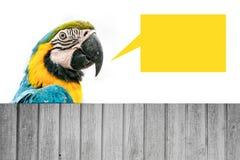 Попугай ары Стоковая Фотография