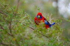 Попугай в ветвях стоковое фото