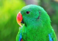Попугай в джунглях Стоковое Изображение