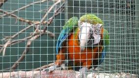 Попугай в клетке в Ирландии стоковые фото