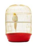 Попугай в клетке Стоковые Изображения RF
