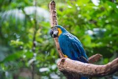 Попугай в парке птицы, Iguazu, Бразилии Стоковое Изображение