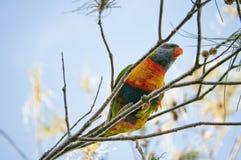 Попугай есть плодоовощ стоковые изображения
