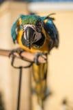 Попугай желт-зеленый Стоковые Изображения