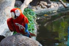 Попугай здравствуйте! Стоковое Фото