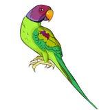 Попугай индийского окружённого попугая ozherelovy также вектор иллюстрации притяжки corel Стоковое Изображение RF
