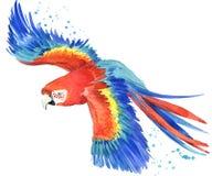 Попугай Иллюстрация попугая акварели Тропическая акварель птицы иллюстрация штока