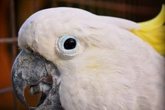 Попугай какаду стоковая фотография