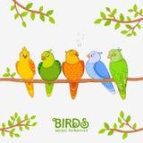 Попугай милый Стоковое Изображение RF