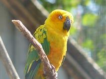 Попугай наслаждаясь солнцем Стоковая Фотография