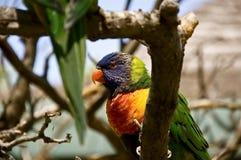 Попугай на ветви дерева Стоковые Изображения RF