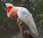 Попугай на ветви дерева Стоковые Фотографии RF