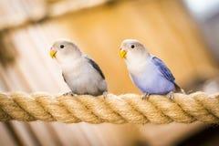 Попугай на зоопарке стоковая фотография rf