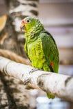 Попугай на зоопарке стоковые изображения rf
