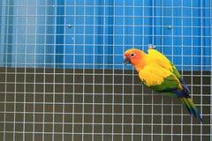 Попугай на клетке Стоковые Фото