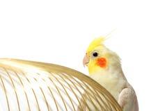Попугай на клетке Стоковые Изображения RF