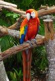 Попугай на мире бабочки, Флорида Стоковая Фотография