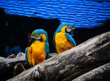 Попугай на парке Стоковое Изображение