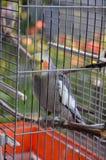 Попугай попугая в клетке Стоковые Фото