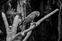 Попугай представляя в деревьях стоковое фото