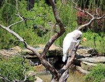 Попугай пытает укус яблока Стоковые Фото