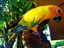 Попугай радуги стоковые фотографии rf