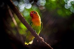 Попугай радуги на ветви Стоковое Изображение RF