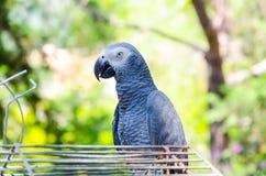 Попугай сидя на клетке Стоковая Фотография